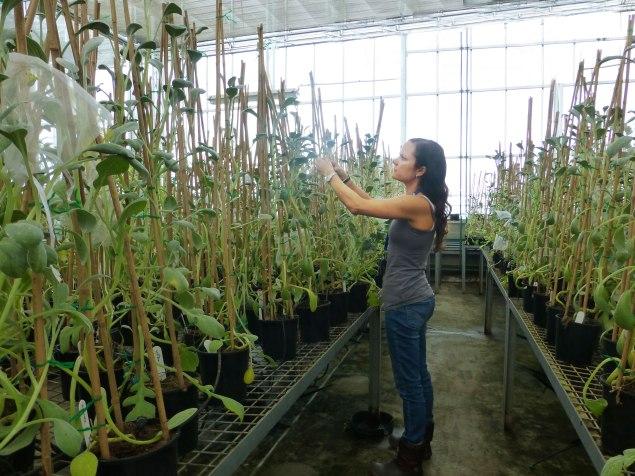 me in greenhouse big