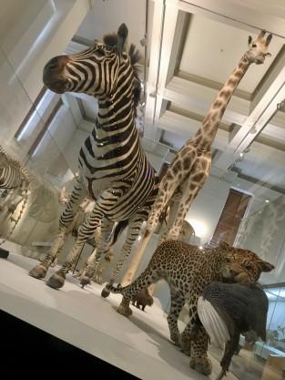 animals at museum